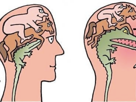 Comment notre système nerveux réagit et s'adapte face au stress ?