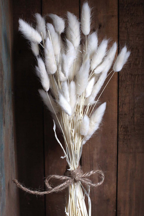Lagurus Naturel Séché Blanc