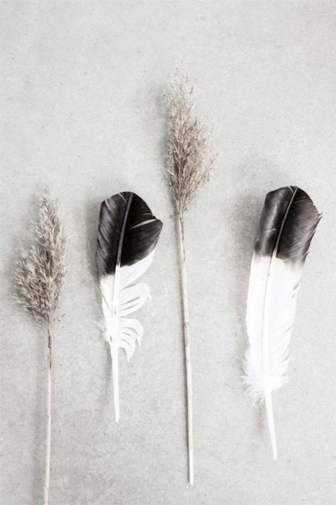 Feather - Black White