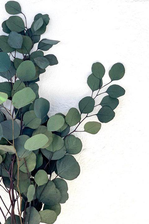 Eucalyptus Espiral Stabilisé Vert
