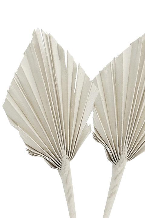 Mini Palm Spear Séchée - Grey