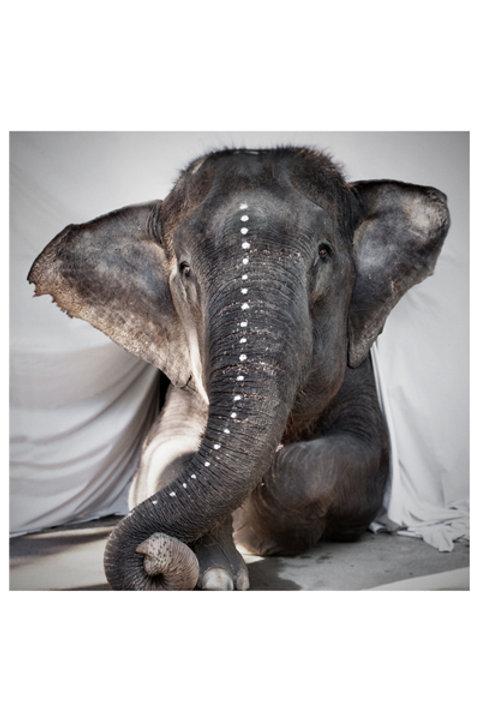 Adele Elephant - Black White
