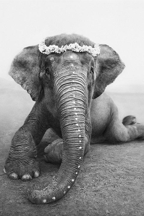 Romantic Elephant Adele - Black White