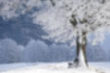 winter-4680354_640.jpg