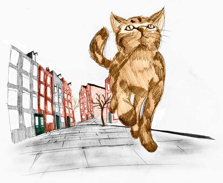 Kat loopt weg van huis