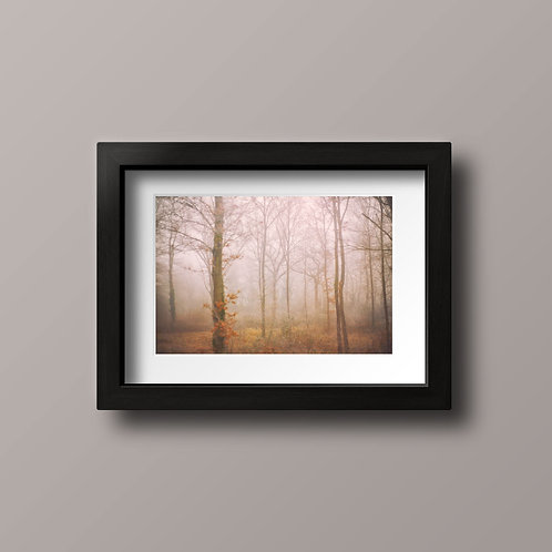 Into the trees - Ref L003