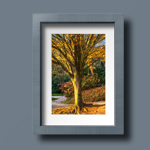 Golden Tree - Ref A001