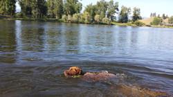 sadieswimming