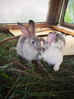 rabbit7.jpg