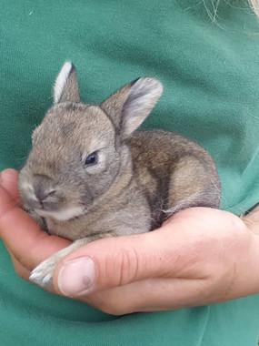 rabbit6.jpg
