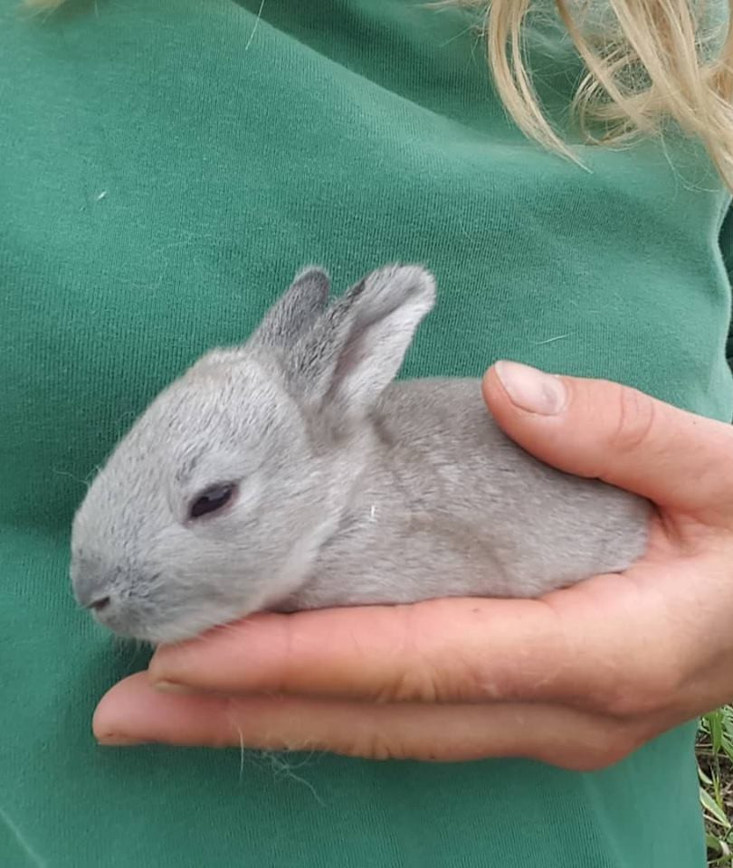 rabbit5.jpg