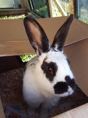 rabbit3.jpg