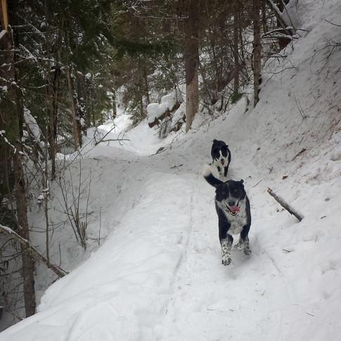 pulaski trail joy