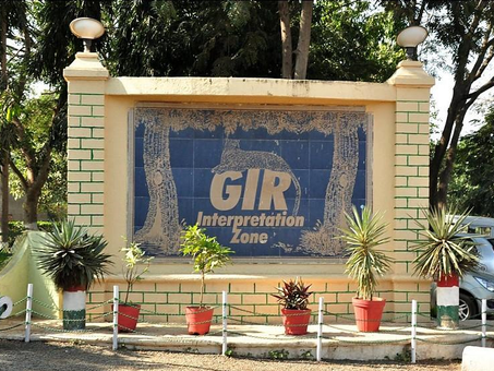 Gir National Park | A Complete Travel Guide to the Land of Asiatic Lions!
