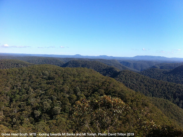 Grose Head South - Looking towards Mt Banks and Mt Tomah Photo: David Tritton 2019