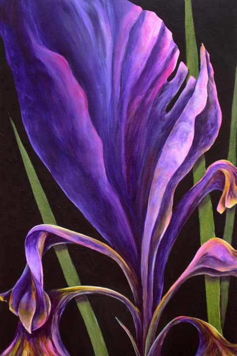 Purple Iris 2.jpg
