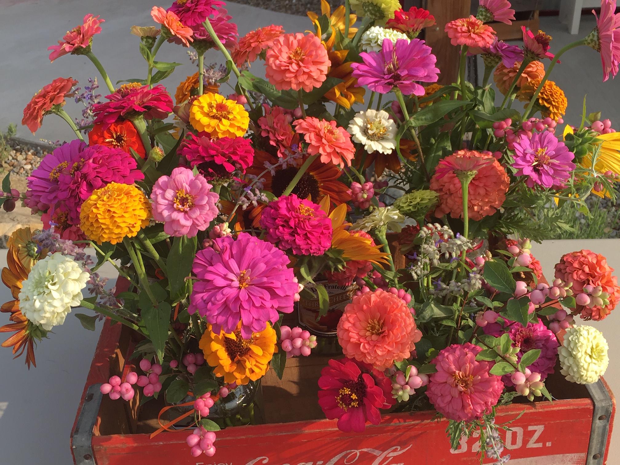 Flowers - zinnias 2018