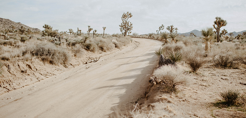 Photo of a dirt road in Joshua Tree National Forest