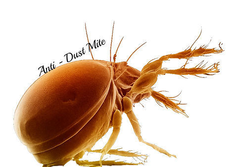 Fiber Care Dust Mite Anti Allergen Treatment Kuala Lumpur and Selangor
