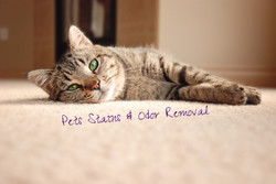 Pets Stains & Odor Removal