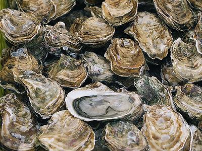 chesapeake---oysters.jpg