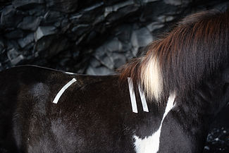 hestbak-43.jpg