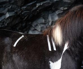hestbak-43_edited.jpg