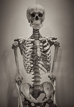 human-skeleton- CCO licence.jpg