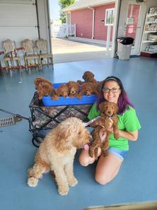 goldendoodles at the vet