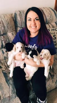 parti mini goldendoodle puppies