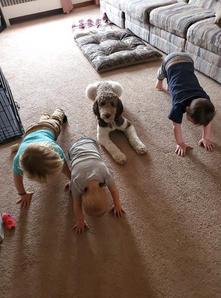 yoga poodle