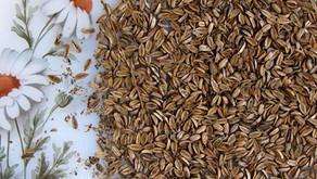 זרעי שומר בר – תבליני הסתיו