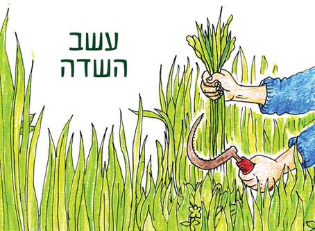 לשתות את השדה - מיץ עשב חיטה ושעורה