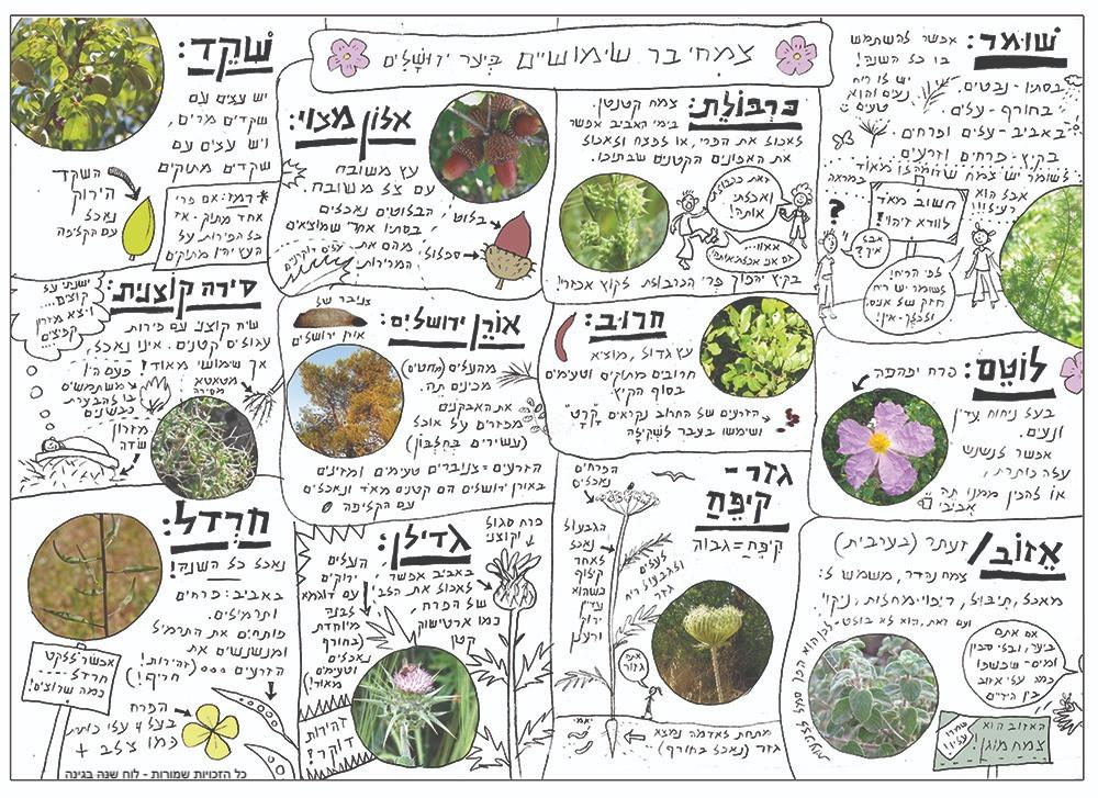 מדריך ליקוט צמחי בר אביבי