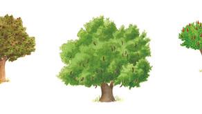 """חג אהבה לעצים - שתילת עצים בט""""ו באב"""