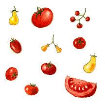 עגבניה - 10 לוחות.jpg