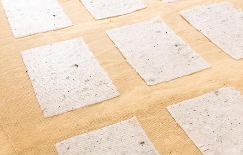 נייר זרעים פרוש 3.jpg