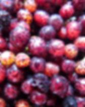 אשחר פירות.jpg