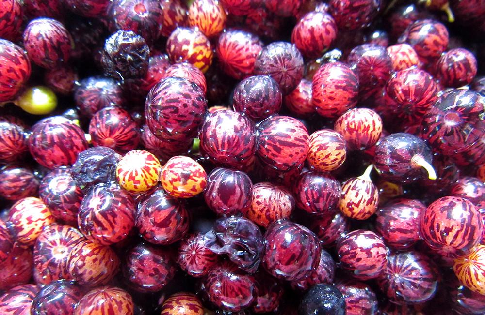 פירות יער בארץ הקודש
