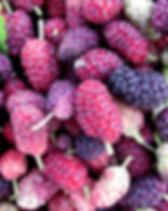 תות 2.jpg