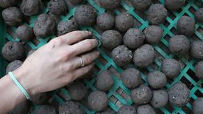 כדורי זרעים - פצצות של תקווה