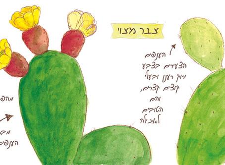 צבר מצוי - ישראלי חדש או מהגר ישן?