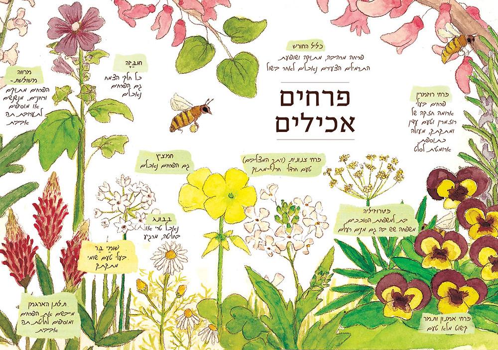 פרחי ירקות ופרחי בר שאפשר לאכול