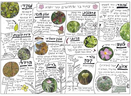 צמחים אכילים נפוצים -מדריך ליקוט צמחי בר אביבי