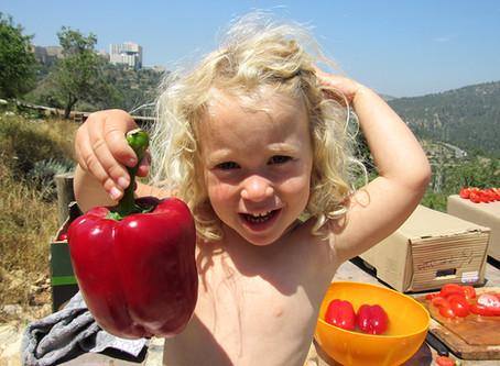 מתוק כל השנה - ייבוש פירות קיץ | מתכון מאוייר