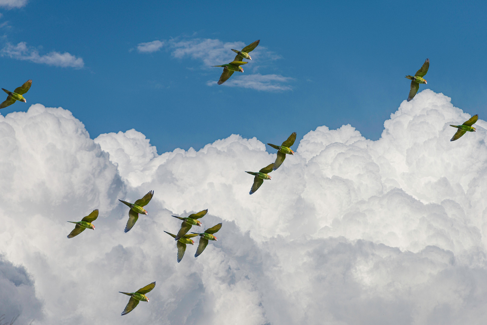 parrots in clouds 2 copy.jpg