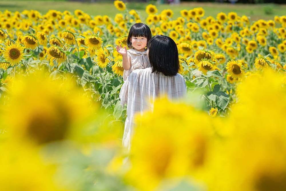 浜松のカメラマンが撮影した浜名湖ガーデンパークのひまわり畑でのファミリーロケーションフォト。