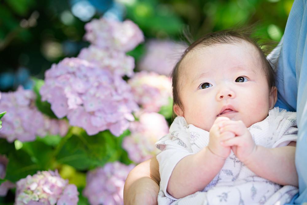 浜松のカメラマンが法多山尊永寺にて紫陽花と一緒に撮った赤ちゃんの写真
