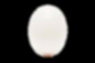 white%2525252520egg%2525252520on%2525252