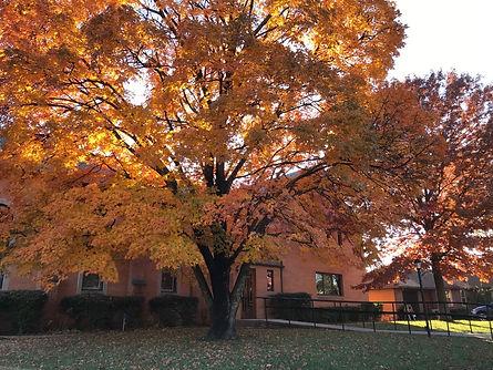 tree in Fall.jpg